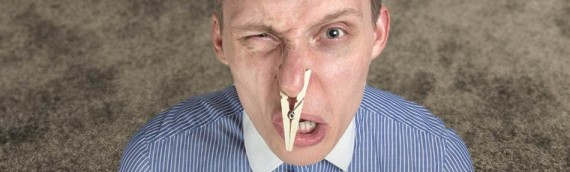 The 3 Causes of Carpet Odors